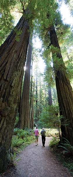 Humboldt-Redwoods-State-Park-by-California-Travel-and-Tourism-Commission-slash-Andreas-Hub