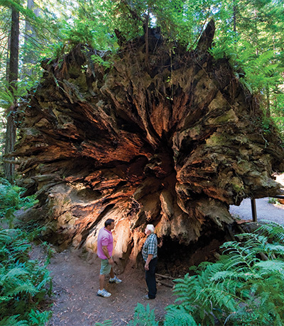 north-coast,-Humboldt-Redwoods-State-Park-courtesy-California-Travel-and-Tourism-Commission-slash-Andreas-Hub
