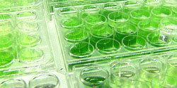 algae-to-fuel research and development