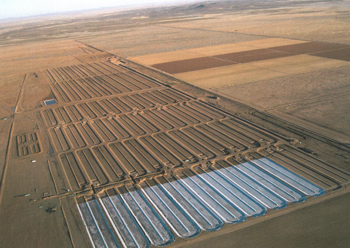 Sapphire Energy's Green Crude Farm achieved first-phase operation earlier this week in Columbus, N.M.